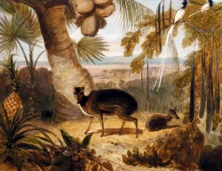 Musk Deer And Birds Of Paradise