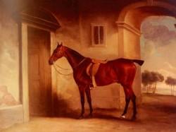 A Saddled Bay Hunter In A Stableyard