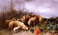 Schafe Eine Vogelscheuche Betrachtend