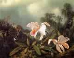 Jungle Orchids and Hummingbirds 1872jpeg