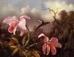 Orchids and Hummingbird 1872jpeg