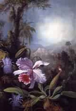 Orchids Passion Flowers and Hummingbird 1875 1890jpeg