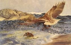 A Sea Eagle Chasing Eider Duck