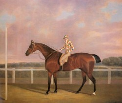 Memnon a Chestnut Racehorse With Jockey Up