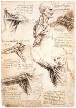 Leonardo da Vinci Anatomical studies of the shoulder