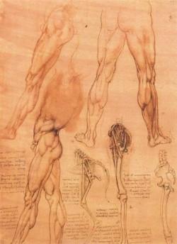 Leonardo da Vinci Studies of legs of man and the leg of a horse
