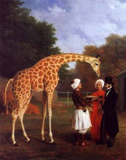 The Nubian Giraffe