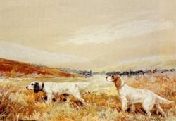 Two Setters In A Field