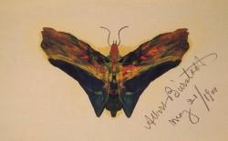 Butterfly v2