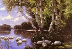 Elf Enten Unter Birken Und Im Wasser