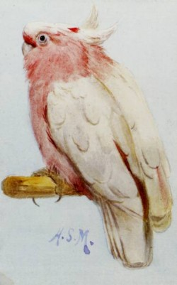 A Pair Of Leadbetter Cockatoos