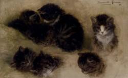 Studies Of Kittens