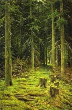coniferous forest 1873 XX the belorussian museum of arts minsk belarus