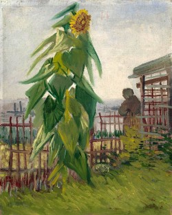 Állotment with Sunflower, 1887 Vincent van Gogh
