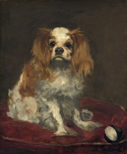 a king charles spaniel 1866 XX the national gallery of art washington dc usa