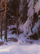 A Snow Covered Forest