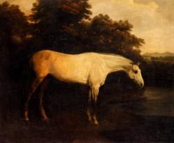 A Grey Hunter In A Landscape